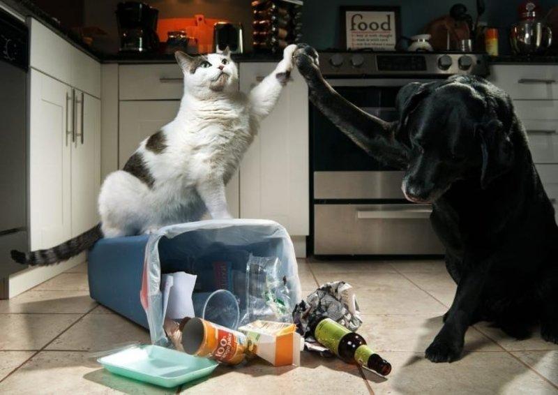 Выходки котов, которые почему-то им сходят с лап
