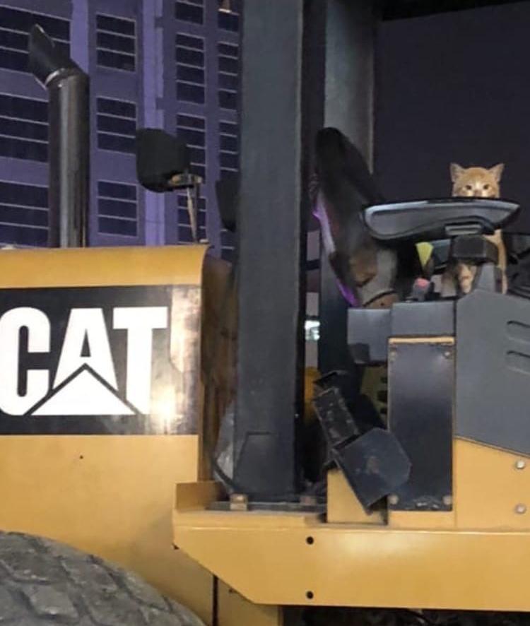 """Кот и """"Cat"""""""