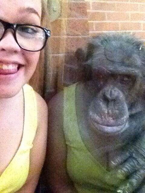 Кажется, что шимпанзе в платье