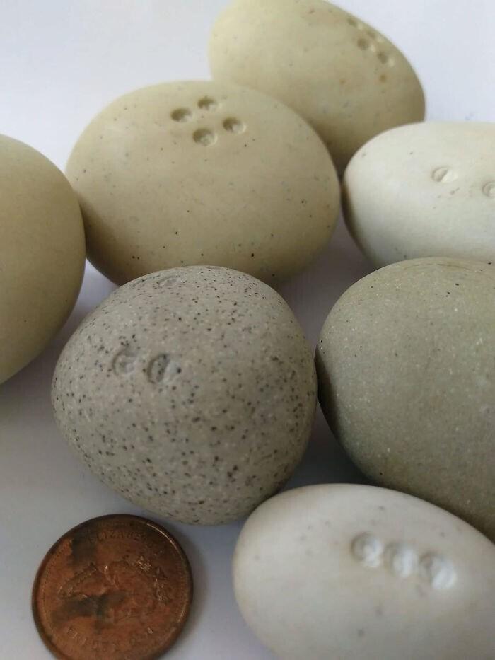 Найдено 14 лет назад в дыре, сделанной в бревне, на пляже Даллас-роуд в Виктории, Британская Колумбия, Канада. Тайна, которая остается неразгаданной