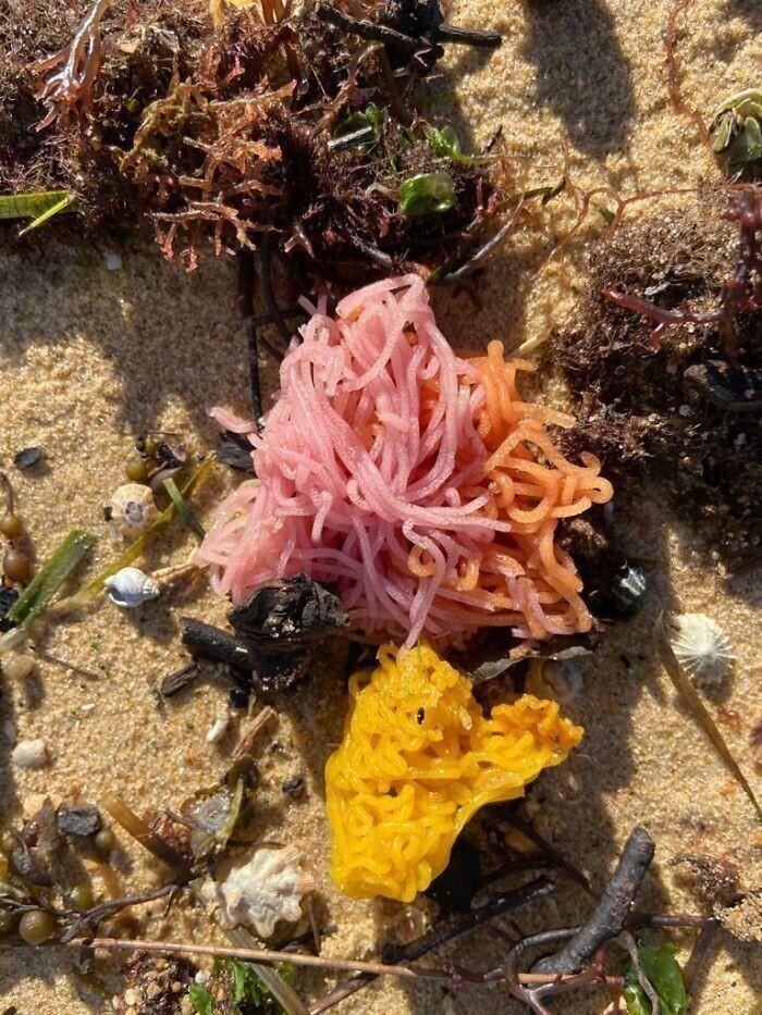 Что это за штуки, похожие на цветные шерстяные нитки? Найдено на австралийском пляже