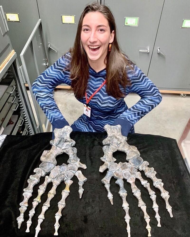 Так выглядели передние конечности североамериканских мезозавров (Mosasaurus conodon). Демонстрация сделана в музее Скалистых гор