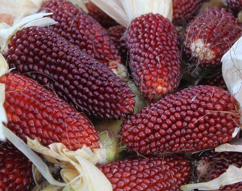 А вы знали, что есть земляничная кукуруза?