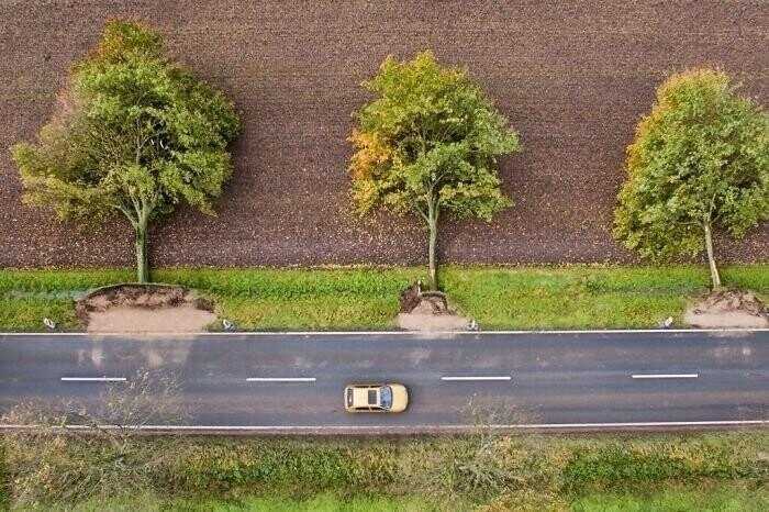 Вырванные после шторма в Германии деревья