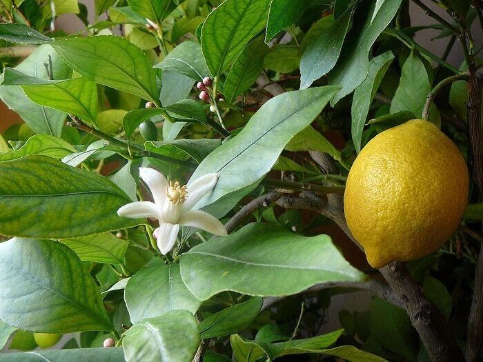 Спасет ли от простуды витамин С?