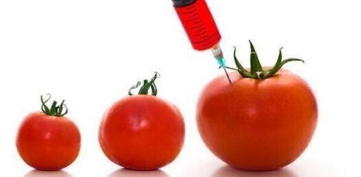 Опасны ли ГМО?