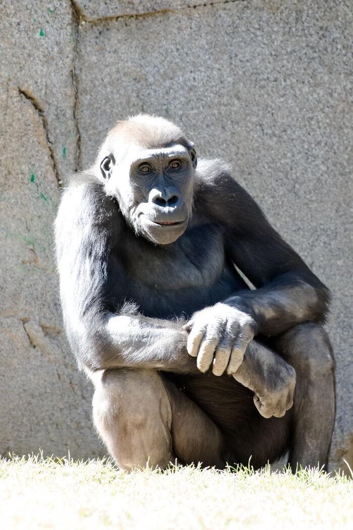 Мы - потомки обезьян?