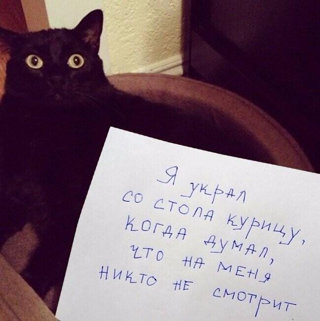 """Только посмотрите на их глаза """"по 5 рублей"""""""