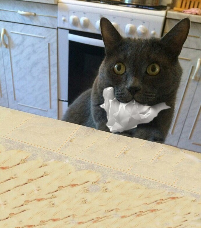 Иногда коты предпочитают промолчать
