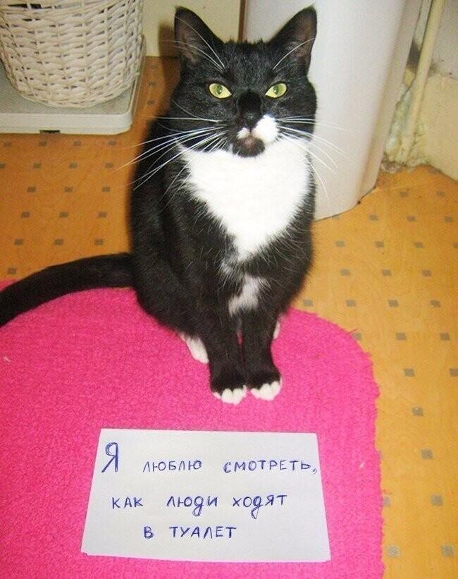 18 переводов с кошачьего