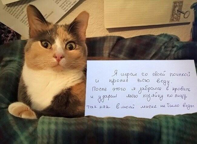 Агрессия со стороны котов? Нет! Люди сами виноваты