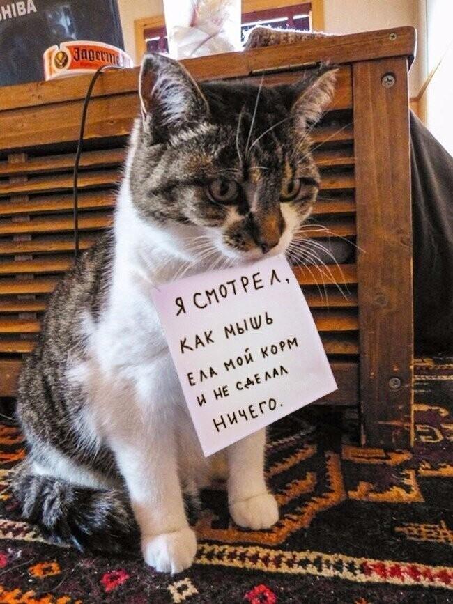 Ох уж эти кошачьи истории... читали бы и читали