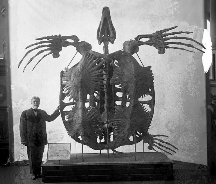 Архелон — вымершая гигантская морская черепаха
