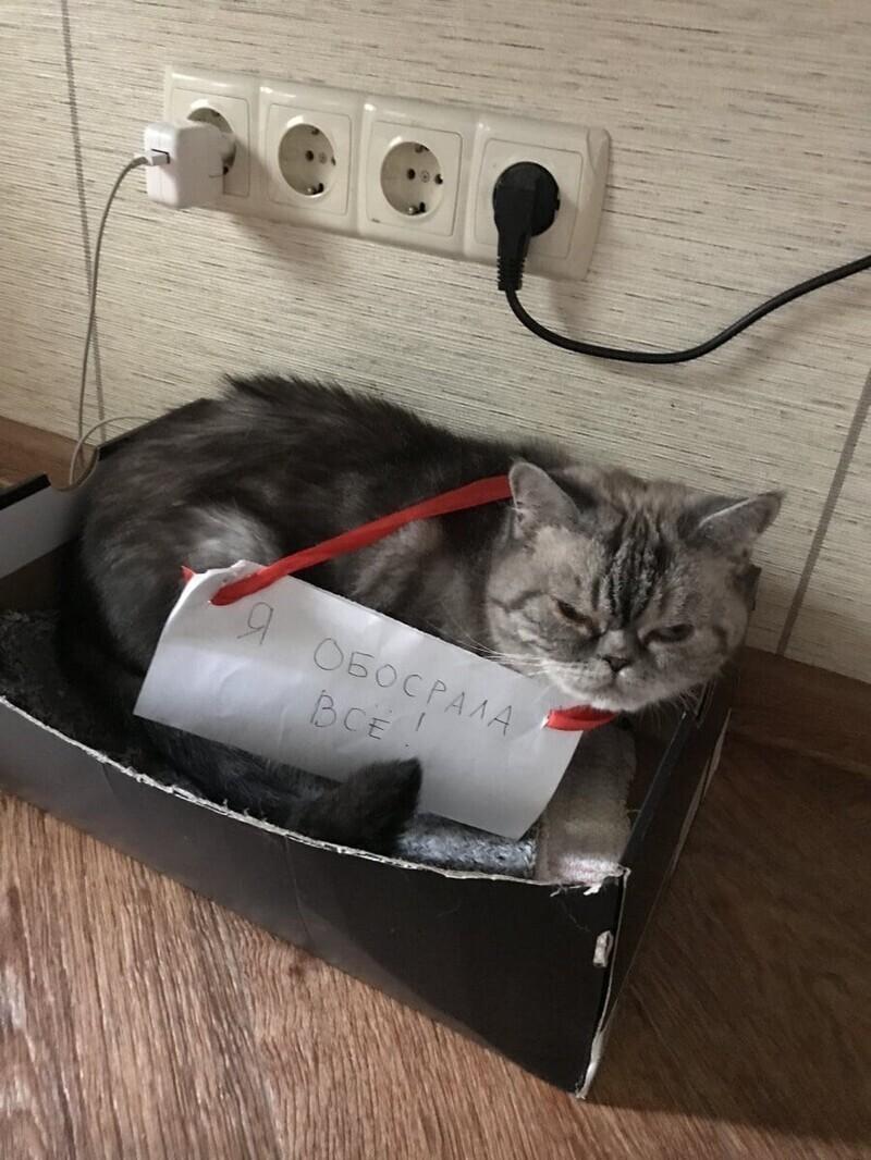 Эта кошка явно готовит план мщения за табличку