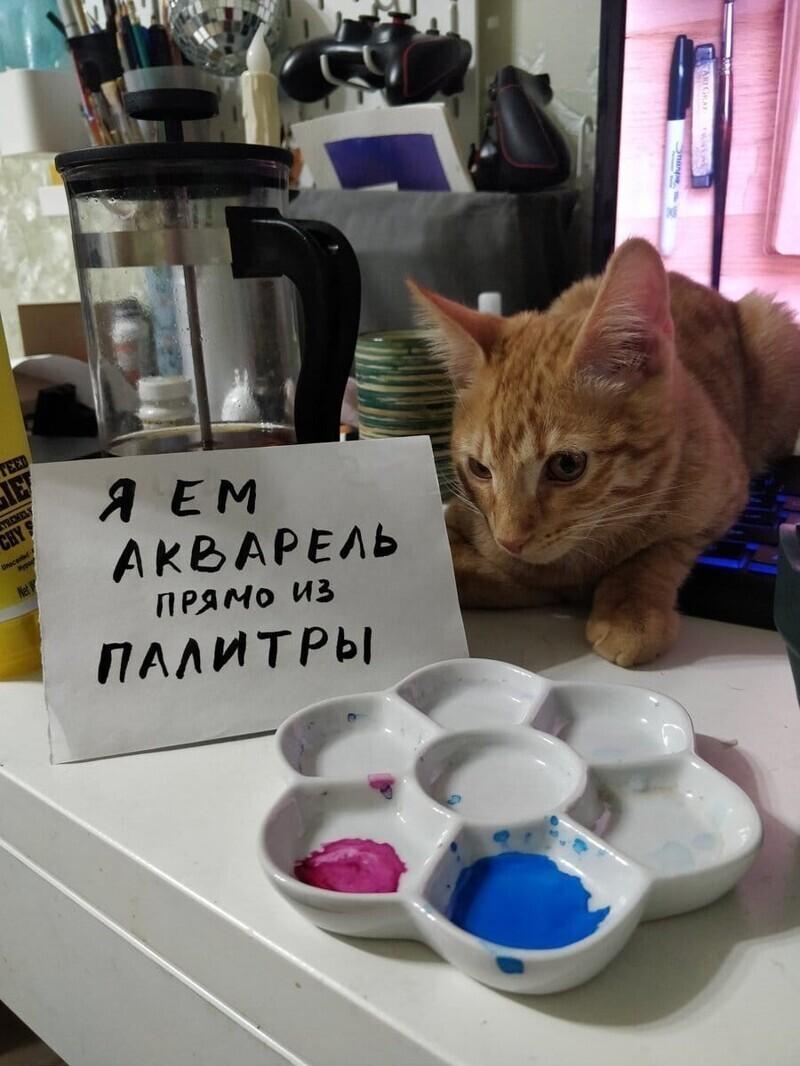 Когда кот — художник в душе