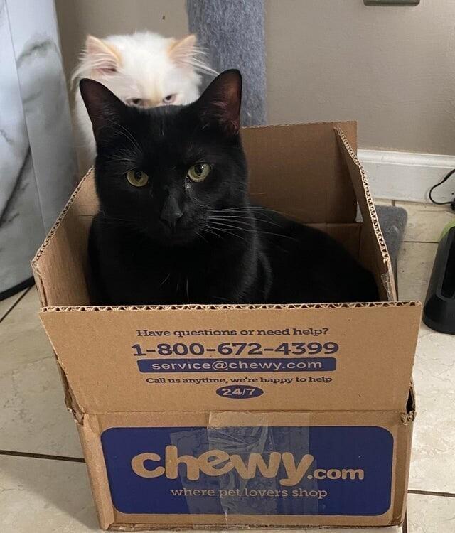 Когда очень хочется в коробку