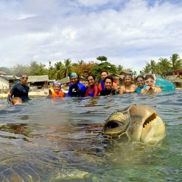 Выход черепахи