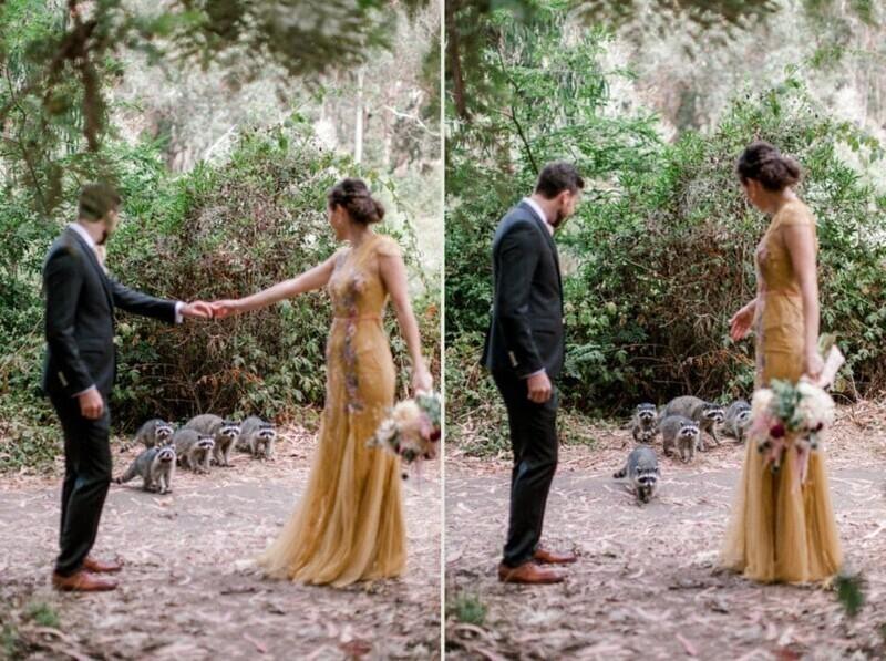 Семья енотов решила украсить свадебную фотосессию