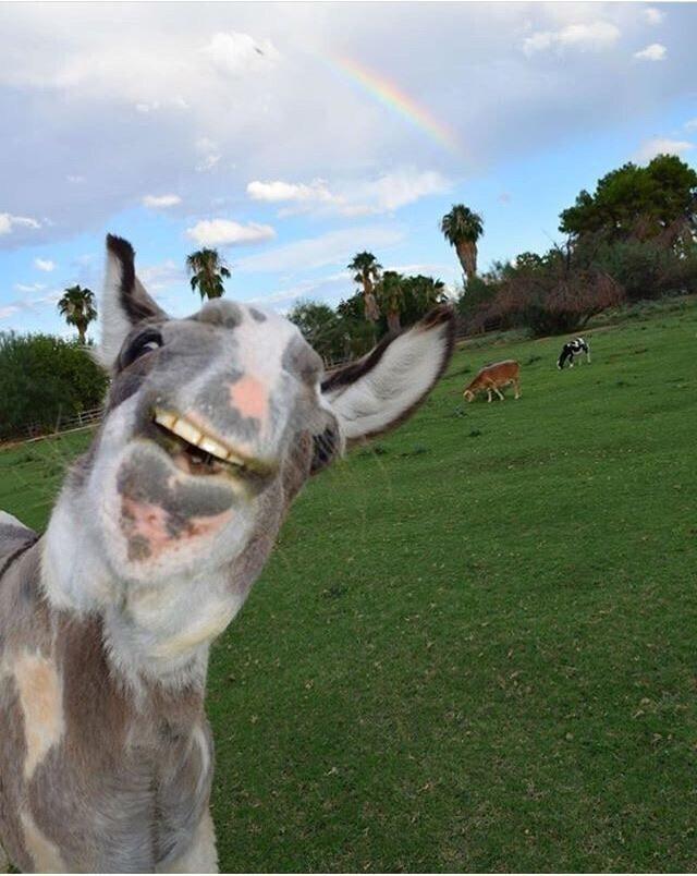 Когда хочешь сфотографировать радугу, а ослик хочет печенье