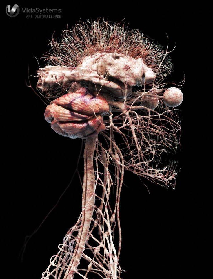 3D модель нервной системы человека