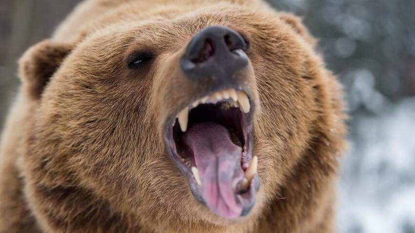 Бывает и такое - в Омсукчанском округе Магаданской области медведь напал на 68-летнего участника геолого-разведывательной экспедиции. К сожалению, дикий зверь не оставил пенсионеру ни малейшего шанса на жизнь.