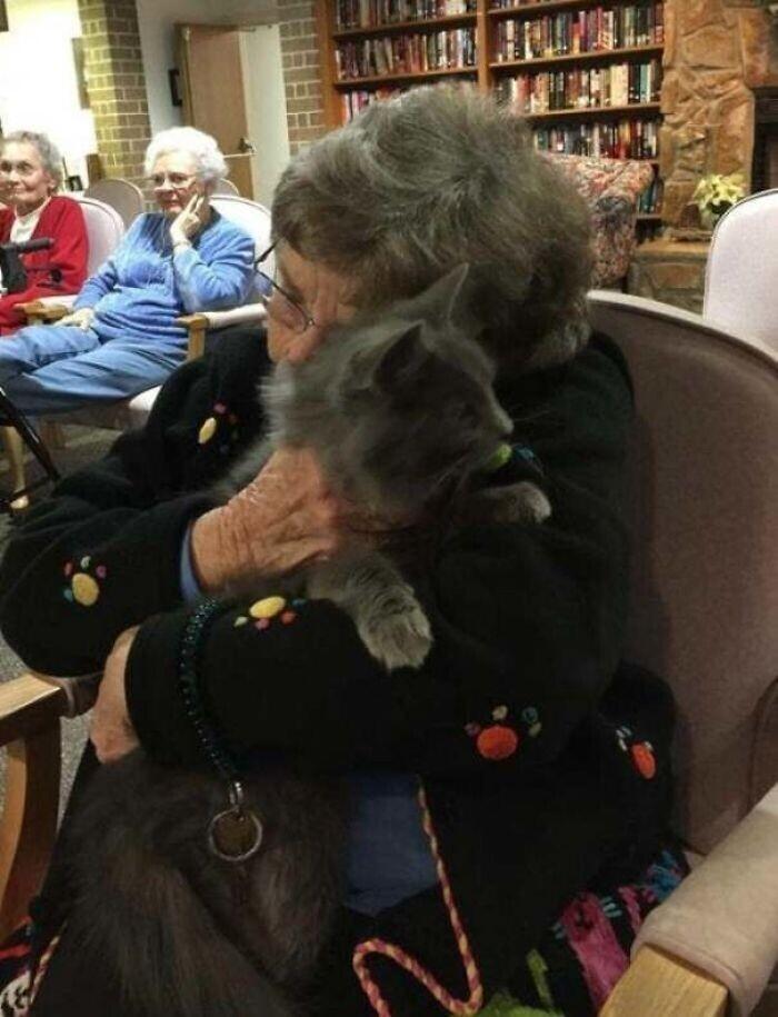 """""""Кошка, которая живет у меня на передержке, участвует в программе терапии в домах престарелых. Это фото - вместо тысячи слов"""""""