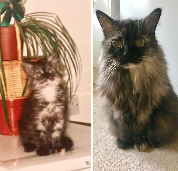 """""""Моей кошке почти 20 лет. На фото слева ей несколько месяцев, и мы только ее взяли"""""""