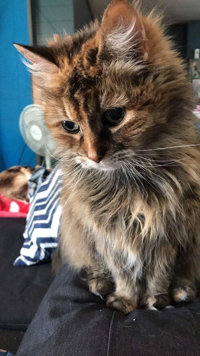 """""""Когда твоему коту уже 20 лет, но он не разучился делать милые просящие глазки"""""""