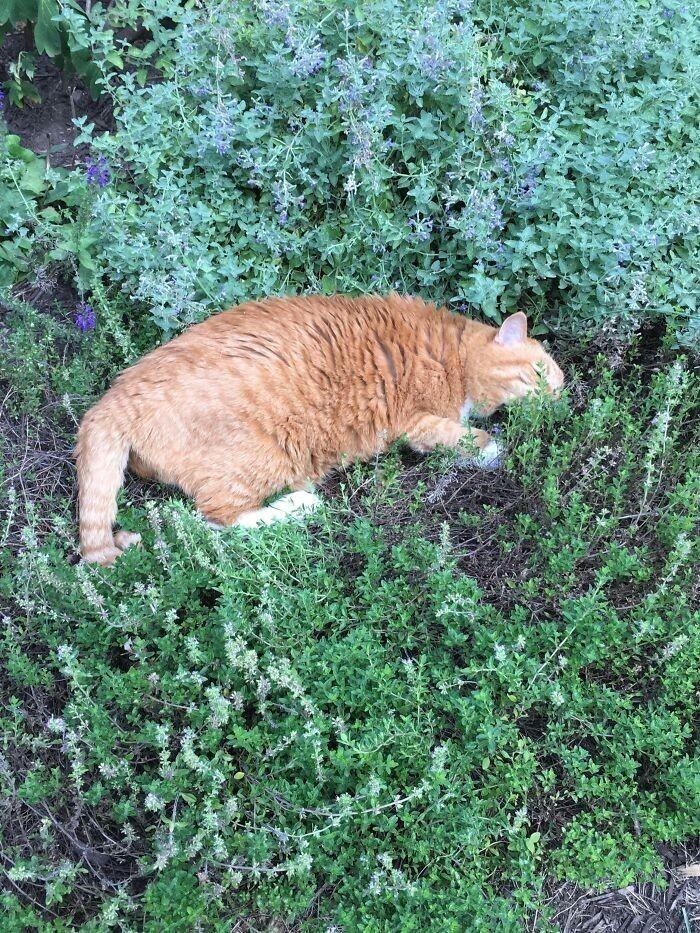 """""""Мой 19-летний кот только что обнаружил, что он обожает запах лаванды"""""""