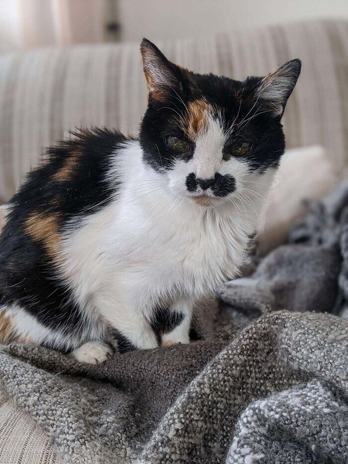 """""""Мой дедушка недавно умер, и никто не хотел забирать его 18-летнего кота. Я решила взять его к себе"""""""