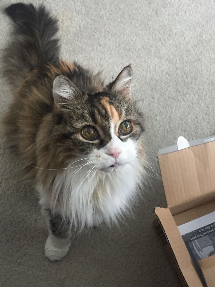 """""""Моя 22-летняя кошка внезапно заметила, что я ем что-то вкусное"""""""