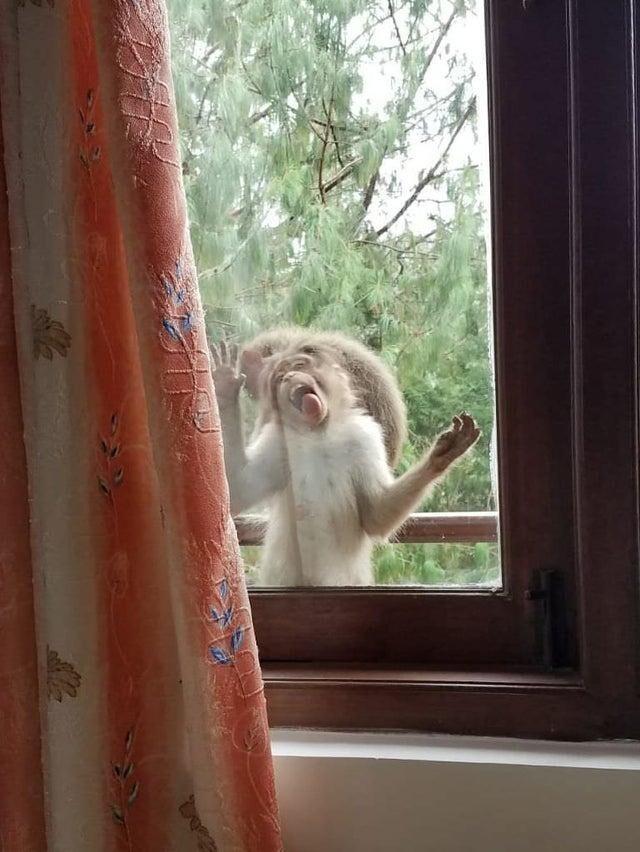 Когда моя мама позвонила и сказала, что за окном обезьяны, я ей конечно не поверила. Но как выяснилось, они просто сбежали из цирка-шапито