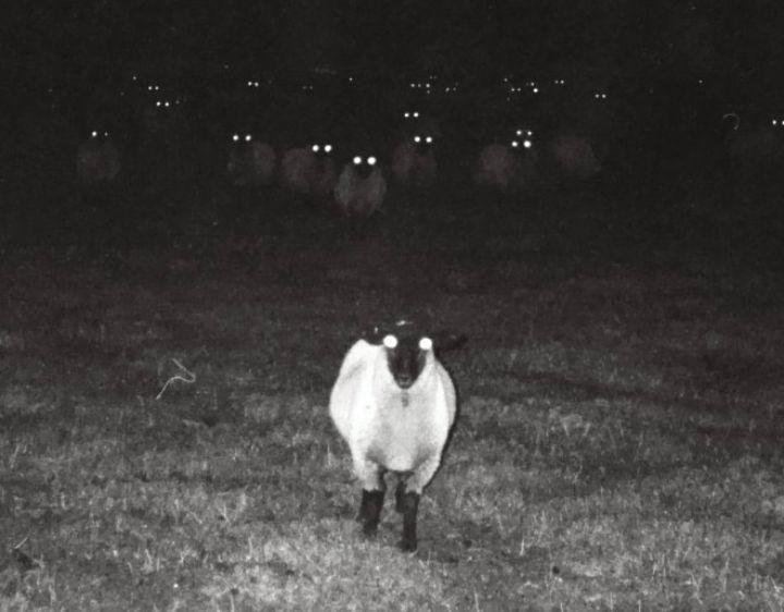Я больше не считаю перед сном овечек