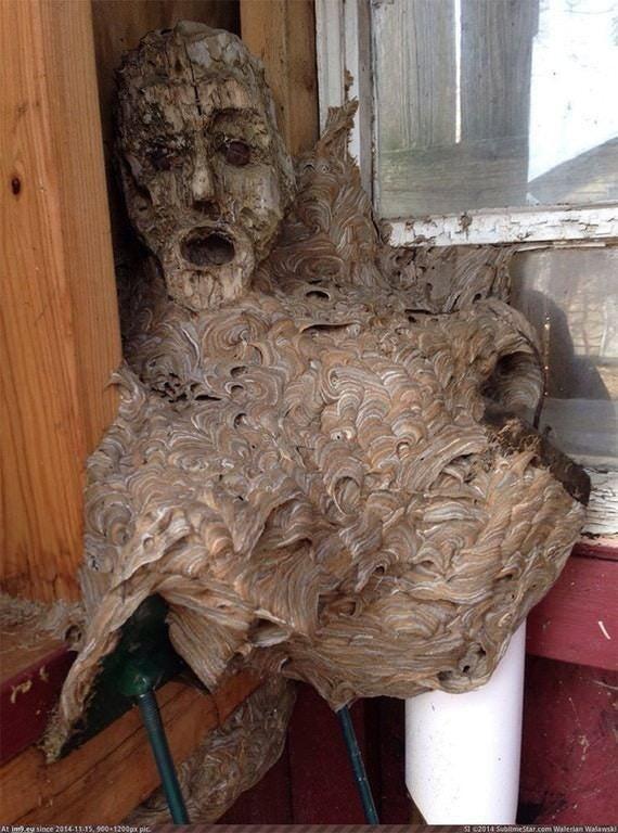 Прежде чем я поняла, что это шершни построили гнездо на маске, я пережила несколько неприятных минут