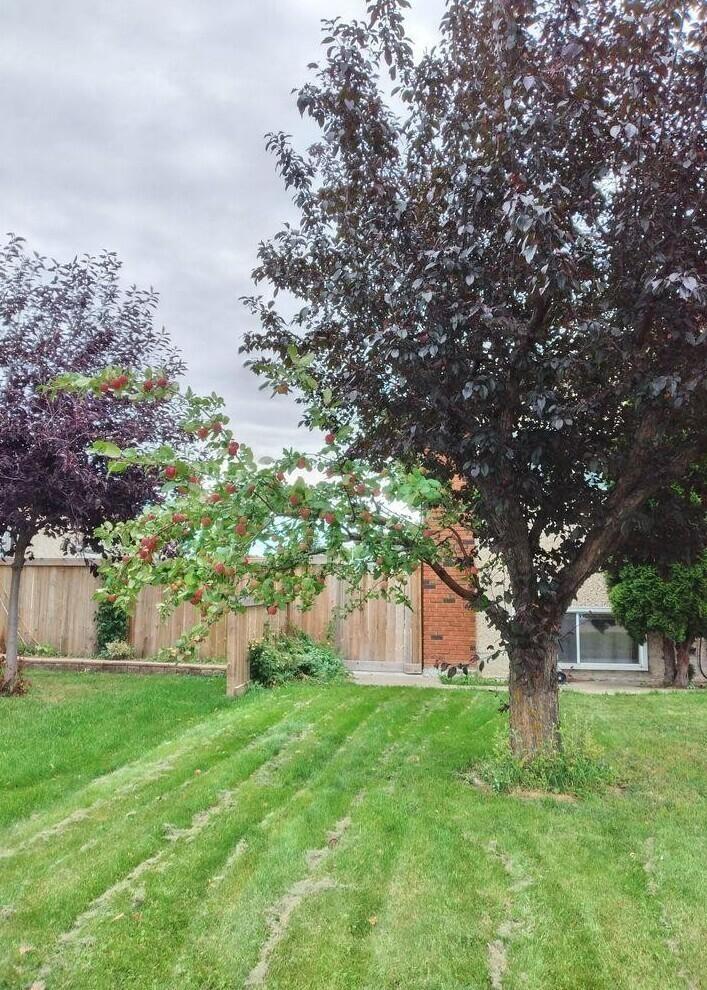 «У этого дерева в моем районе есть только одна ветка яблони, а все остальные — обычное дерево»