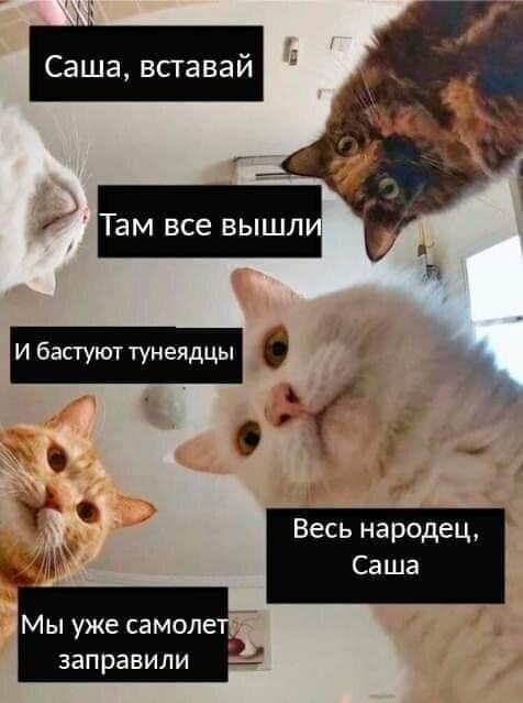 Котов адаптировали и под эту политическую ситуацию
