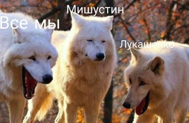 """Ситуация с """"перехватом"""" разговора о Навальном"""