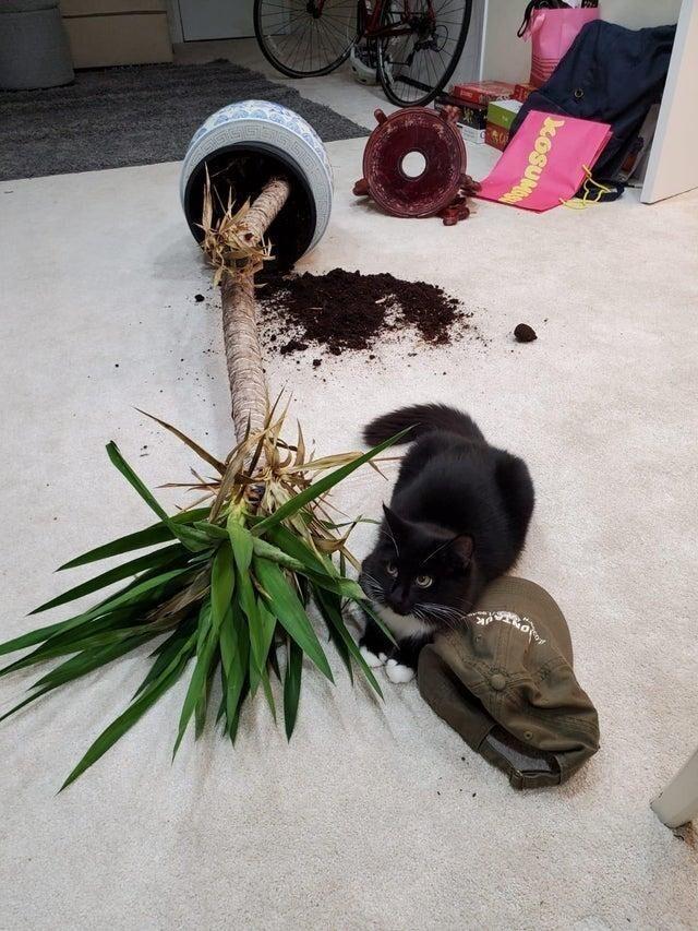 Этот цветок ему давненько не давал покоя