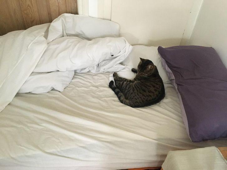 Кровать вроде двуспальная, но вместе с откормленным котиком там трудно поместиться и одному