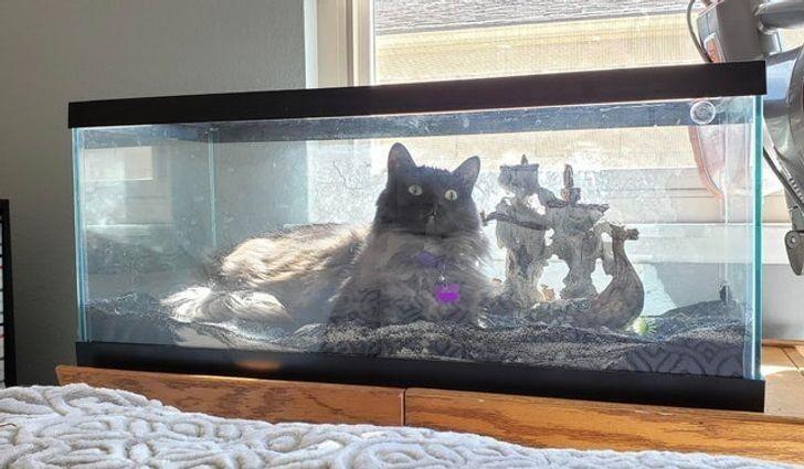 Стоило слить воду из аквариума для ремонта, а кот тут как тут!