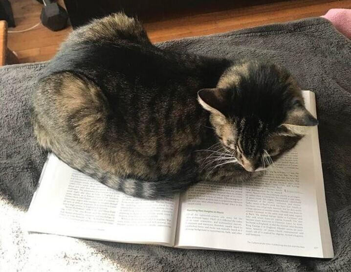 Типичное кошачье поведение, ни добавить, ни отнять