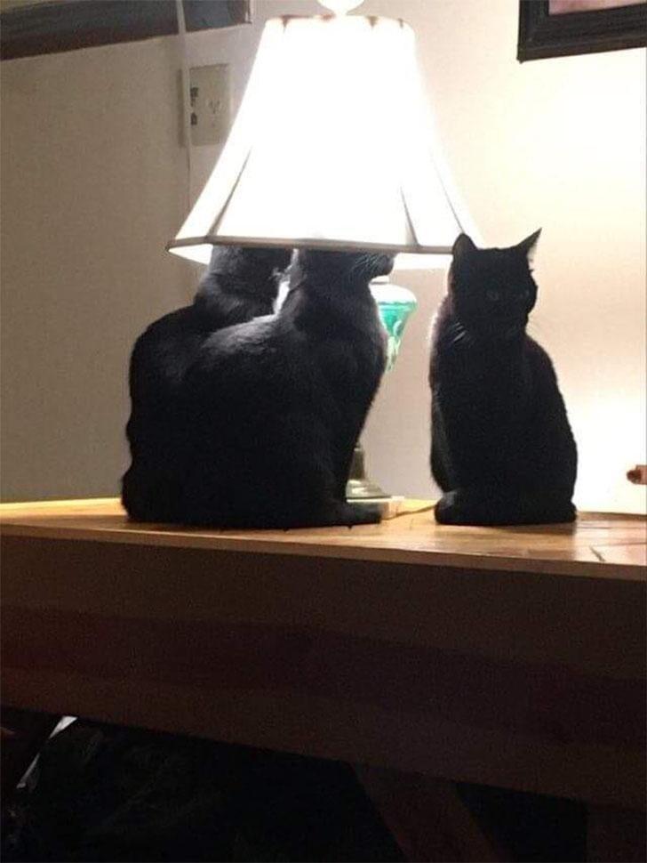 Под лампой посидеть самое то