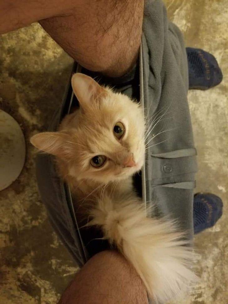 Кошке удобно, а хозяин потерпит