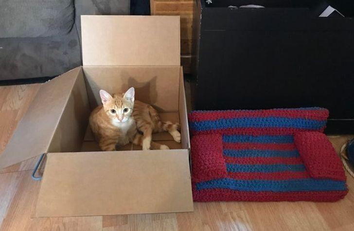 После такого разочарования хозяйка зареклась что-то вязать для кота