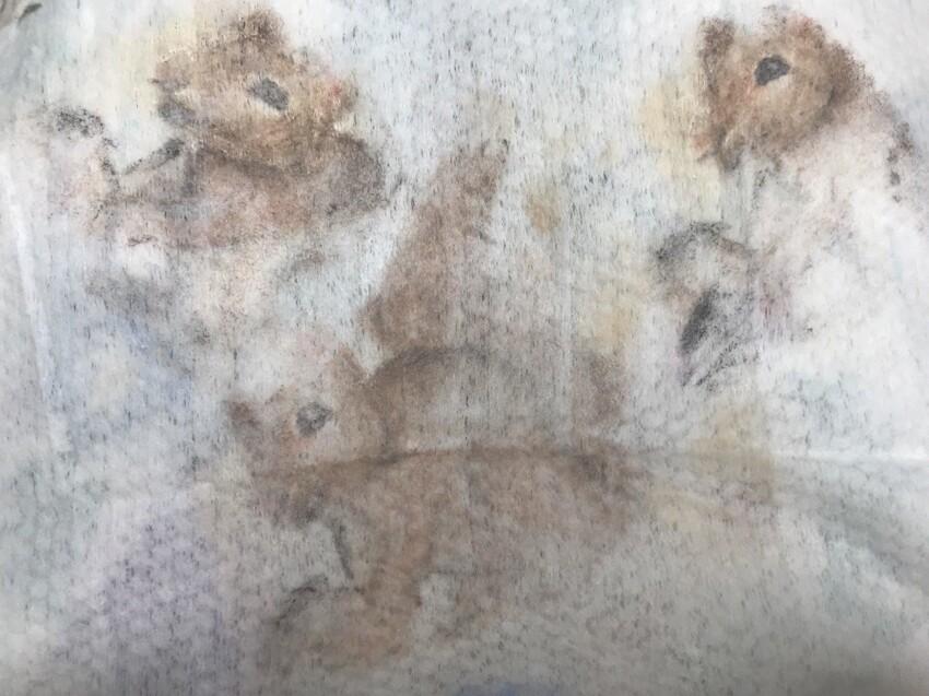 Это очищающая салфетка, но выглядит как изображение белок акварелью