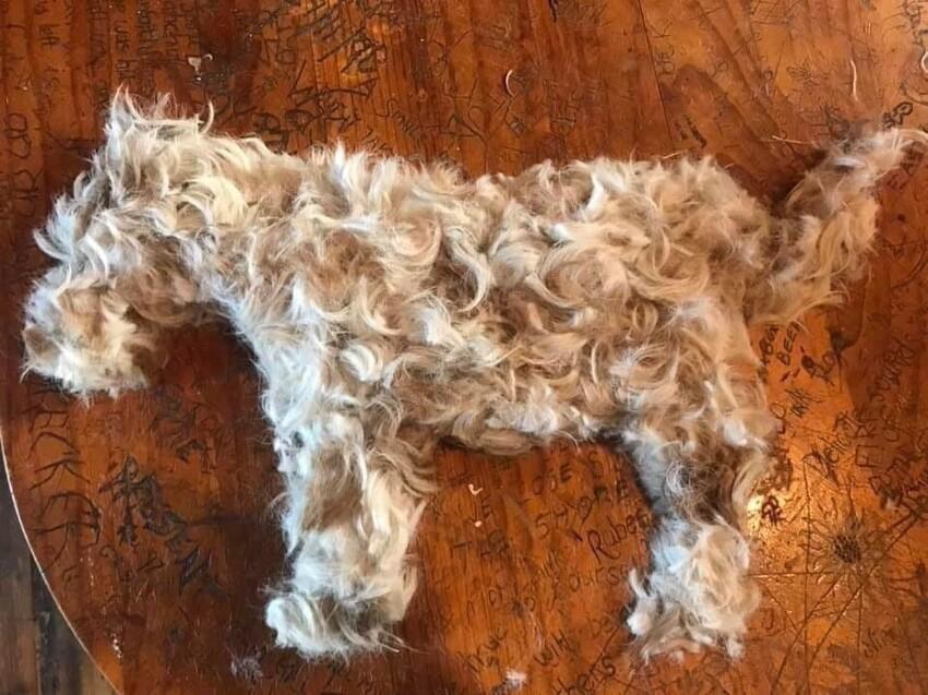 Это не сама собака, а просто её подстригли