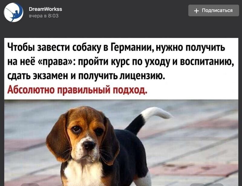 В Германии собаку важно зарегистрировать. Никаких курсов, экзаменов и лицензий не требуется
