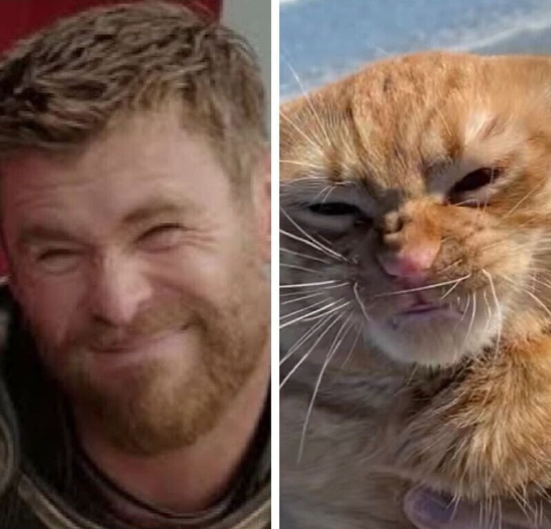 Реакция кота на природные шуточки так понравилась пользователям, что его сравнили с мемом