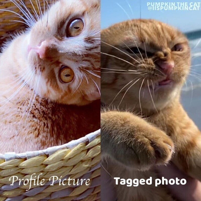 Хозяйка пошутила, что если бы кот был человеком, то вряд ли бы выложил такие фотографии