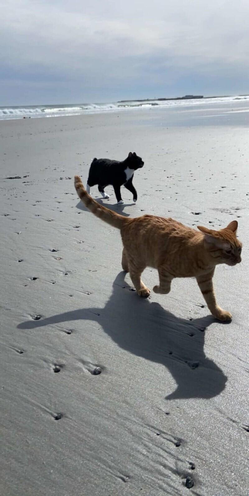 Недавно семья решила взять котов с собой на пляж, и сначала всё шло прекрасно